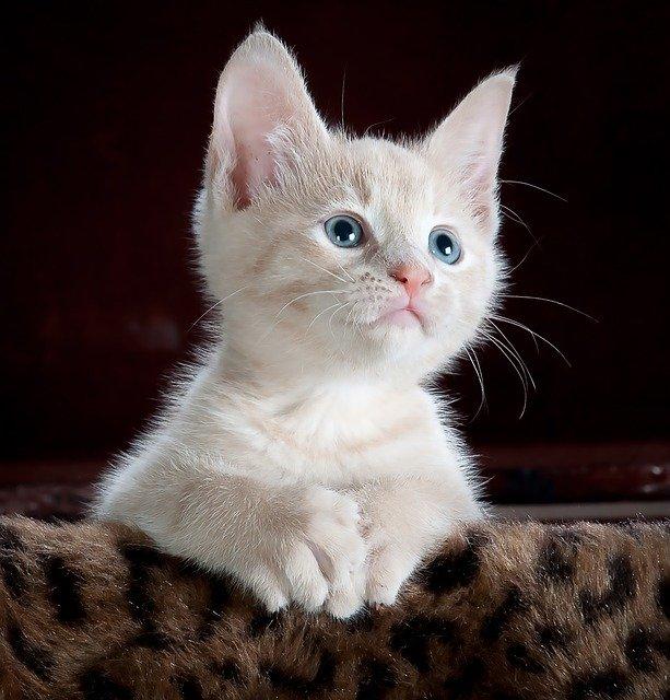 bílá kkočka