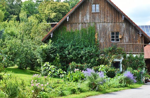 Drevený dom obklopený zeleňou a obrastený brečtanom