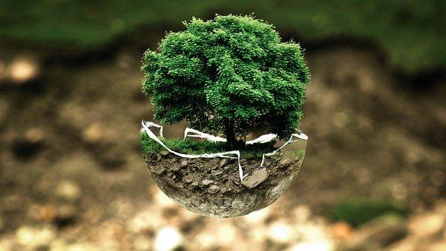 Zelený strom s veľkou korunou v abstraktnej mise.jpg