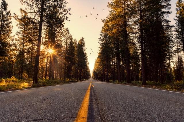 Asfaltová cesta so žltými čiarami, západ slnka, stromy a vtáky na oblohe.jpg